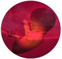 baby_fetus